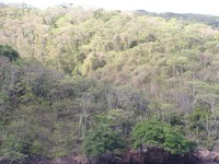 Aerial view of tropical deciduous trees