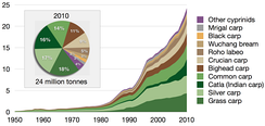 Aquaculture production of cyprinids by species in million tonnes, 1950–2010, as reported by the FAO.[39]