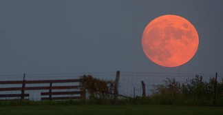 A harvest moon. Its orange color is due to greater Rayleigh scattering as the moon appears close above the horizon, rather than being unique to harvest moons.[14]