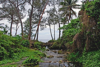 Stream on Efate island.