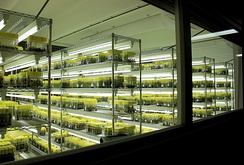 The cold storage room for the banana collection at Bioversity International's Musa Germplasm Transit Centre