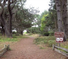 Ecological staircase trail in Jug Handle State Nature Reserve