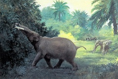 Gomphotheres (reconstructed) were hunted in Sonora by ancient Clovis hunters.