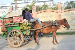 Tanga (carriage) at Darbhanga Bihar