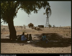 Donkey team at Wave Hill station, Northern Territory, circa 1946
