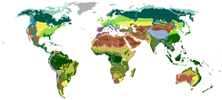 Map of terrestrial biomes classified by vegetation