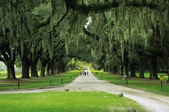 The avenue of live oaks at Boone Hall in Mount Pleasant, South Carolina, planted in 1743.