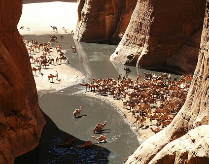 Camels in the Guelta d'Archei, a landmark in the plateau