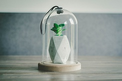 A modern day decorative glass bell jar containing a succulent