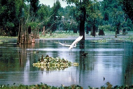 Atchafalaya Basin Sherburne Complex Wildlife Management Area