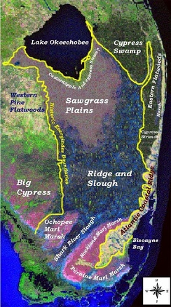 Major landscape types in the Everglades before human action. Source: U.S. Geological Survey