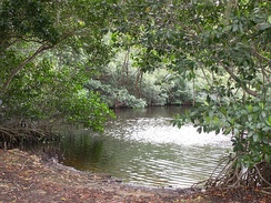 Mangrove swamps are coastal wetlands. This swamp is in the Florida Everglades.[1]