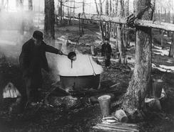 Варка сиропа, провинция Квебек, около 1925 года