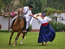 Marinera dance with Peruvian Paso horse.jpg