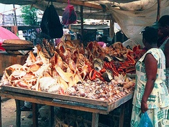 A seashell vendor in Tanzania sells seashells to tourists, seashells which have been taken from the sea alive, killing the animal inside.