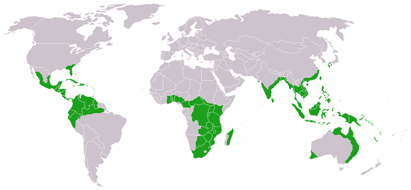 Approximate world distribution of living Cycadales