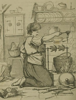 Cook (1855)