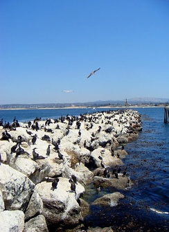 Birds along a rock sea wall near the Coast Guard Station, which borders the Monterey Bay National Marine Sanctuary