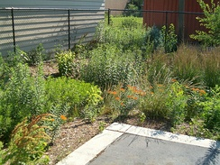 Rain garden designed to treat stormwater from adjacent parking lot