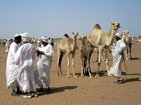 Herders at the camel market on the far west side of Omdurman