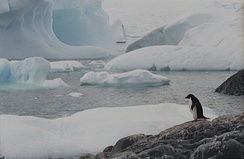 Few creatures make the ice shelves of Antarctica their habitat.