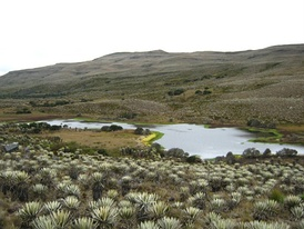 The Sumapaz Páramo, the largest páramo in the world, was home to the Sutagao