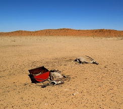 Pair of dead oryx in Namibia during the 2018–19 Southern Africa drought.