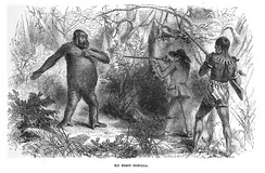 Drawing of French explorer Paul Du Chaillu at close quarters with a gorilla
