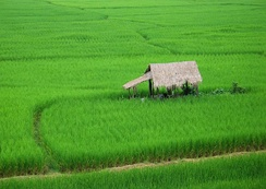 A small hut in between rice paddies on the outskirts of the town of Nan, Thailand