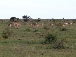 Nursery herd, Tsavo East National Park, 2011. (Copyright James Probert)