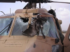 A Sikorsky UH-60 Black Hawk after a collision with a common crane (bird), and resulting failure of the windshield.