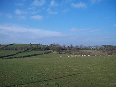 Sheep grazing land west of St Marys Chapel, Cabra (geograph 3326654).jpg