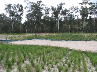 Recently constructed wetland regeneration in Australia, on a site previously used for agriculture