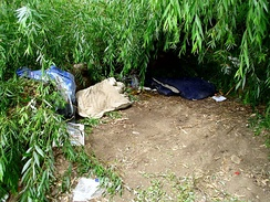 A homeless person's shelter under a fallen willow tree in Australia
