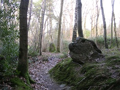 Part of the Rempstone stone circle in birch woodland, Purbeck - geograph.org.uk - 25149.jpg