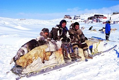 Some Inuit people on a traditional qamutik (dog sled) in Cape Dorset, Nunavut, Canada