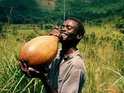 Bottle gourd or calabash used to contain palm wine in Bandundu Province, Democratic Republic of the Congo