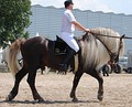 Игреневая лошадь