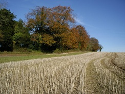 Harvested field, Hampshire