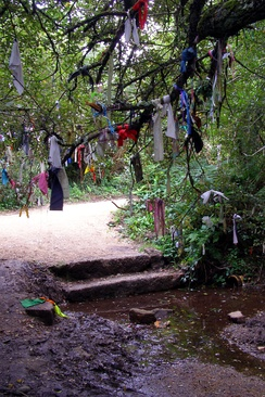 Cloths tied to a tree near Madron Well in Cornwall