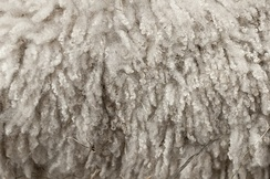 Wool before processing