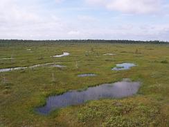 An expanse of wet Sphagnum bog in Frontenac National Park, Quebec, Canada. Spruce trees can be seen on a forested ridge in the background.