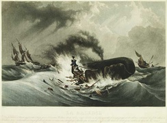 Depiction of baleen whaling, 1840
