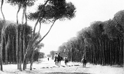 Pine Forest of Beirut, 1914