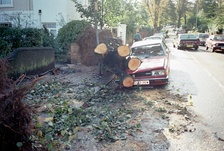 October 16: aftermath of the Great Storm of 1987.