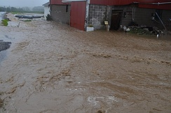 A flash flood greatly inundates a small ditch, flooding barns and ripping out newly installed drain pipes.