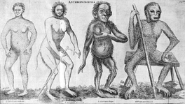 Anthropomorpha depicted in Hoppius' Amoenitates Academicae (1763) 1. Troglodyta Bontii, 2. Lucifer Aldrovandi, 3. Satyrus Tulpii, 4. Pygmaeus Edwardi