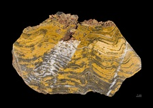 Stromatolite fossil estimated at 3.2–3.6 billion years old
