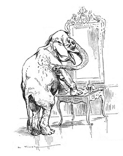 Elephants can recognize themselves in a mirror.[62]