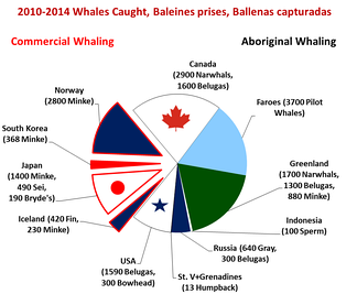 Whales caught 2010-2014, by country